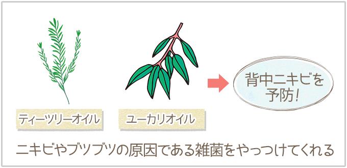 サラスベの特徴:ティーツリー・ユーカリオイルが雑菌をやっつける