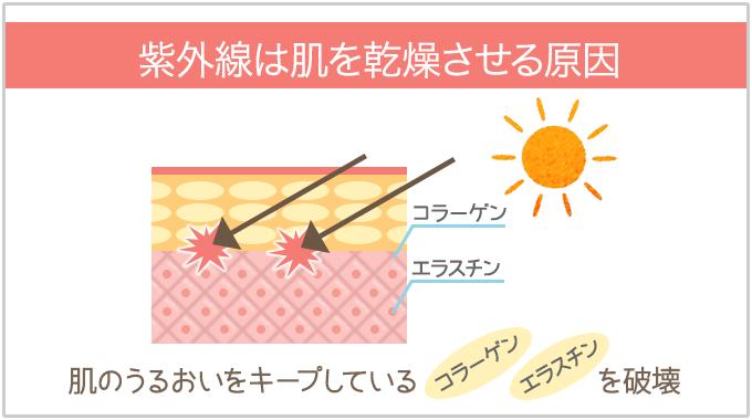 紫外線は肌のうるおいをキープしているコラーゲン・エラスチンを破壊する