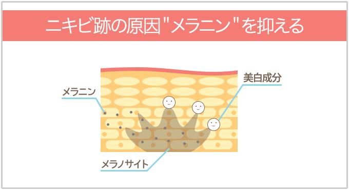 """美白成分がニキビ跡の原因""""メラニン""""を抑える"""